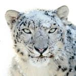 Airも10.7 Lionから10.6 Snow Leopardに戻した